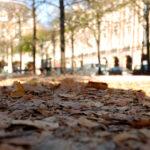 Paris-Froschperspektive21