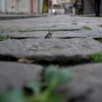 Paris-Froschperspektive13