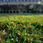 Paris-Froschperspektive8